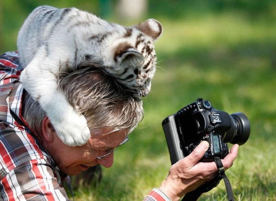 Photographers with animals 13