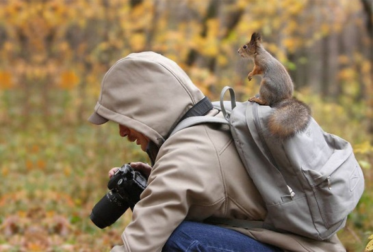 Photographers with animals 14