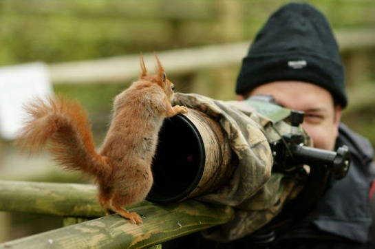 Photographers with animals 20