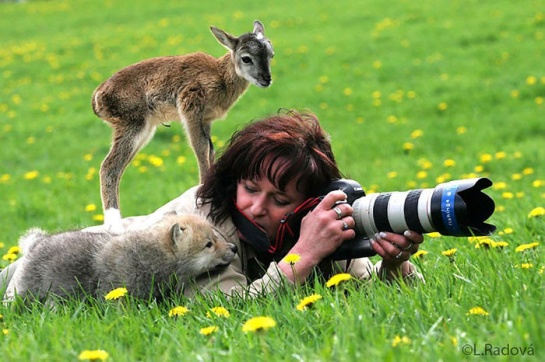 Photographers with animals 4