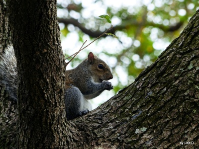 Squirrel Lowry Park Zoo 12-31-15 by Lee