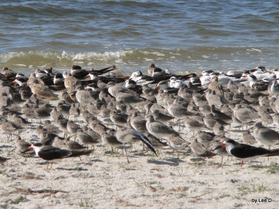 Watching Birds at MacDill AFB Shore
