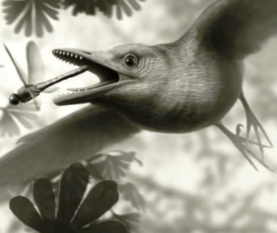 Ancient Birds Flew Over Dinosaurs' Heads