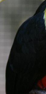 Black/Dark - Sin