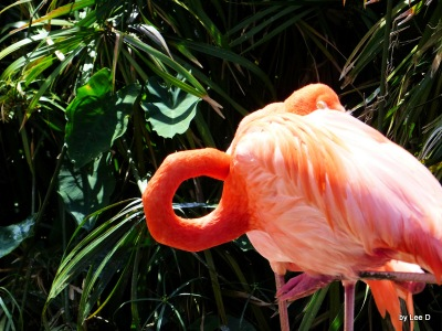 Flamingo at Gatorland - 3-8-16 by Lee