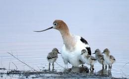 Reviewing Avian andAttributes
