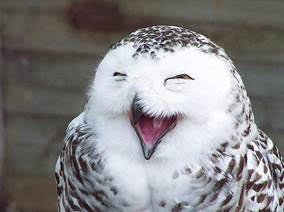 Happy Owl From Email