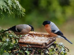 Don't Feed the Birds or They'll Evolve – Re-post fromAIG