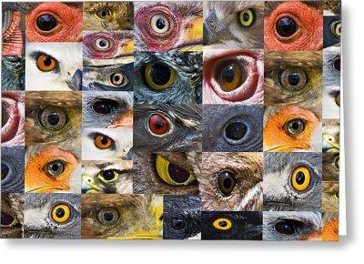 Birds Eyes Basic ©Van zyl