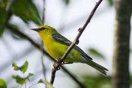Birds Heading South – We Are HeadingNorth