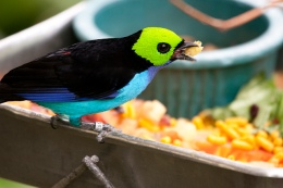Avian And Attributes –Paradise