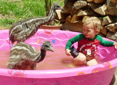 Swimming with the Emus ©©