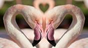 Flamingos In Love ©Pixabay