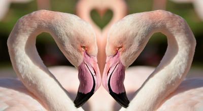 Flamingos In Love ©Pixabay