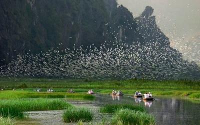 Flock of Birds In The Valley - Bird Garden in Ninh Binh ©Crossingtravel