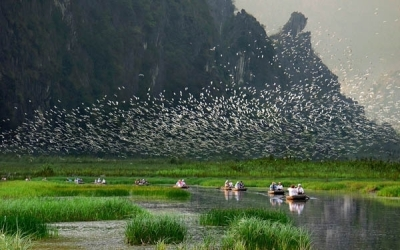 Flock of Birds In The Valley - Bird Garden in Ninh Binh ©Crossingtravel