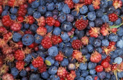 Alaska Wild Berries ©WikiC