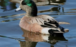 A Time for Joy: Remembering Wigeons and Celebrating ResurrectionDay