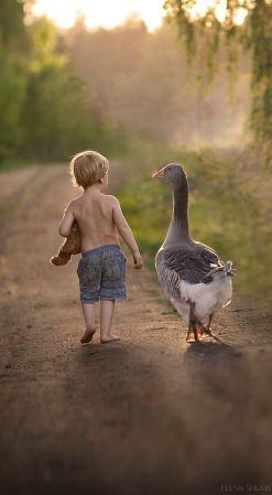 Greylag Goose (Anser anser) Pals Walking ©Pinterest