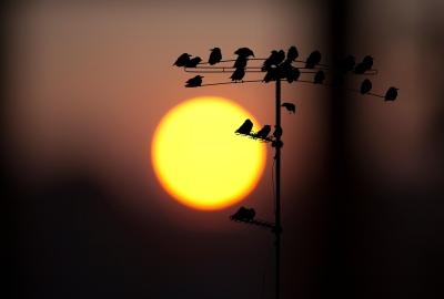 Birds At Sunrise ©PixelFantasies-by Lars Claussen