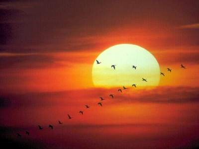 Geese Flying Early in the Morning ©©