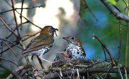 Avian – Happy Mother'sDay