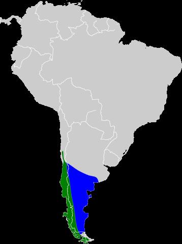 Troc Green-backed Firecrown (Sephanoides sephaniodes) ©Flickr map