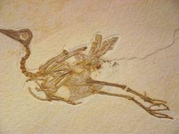 One Of Evolution's Best-kept Secrets – CreationMoments