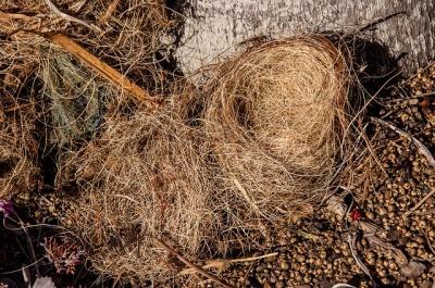 Fallen Nest ©Pixabay