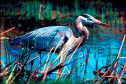 Birds Taking A Sabbath Rest? – from CreationMoments