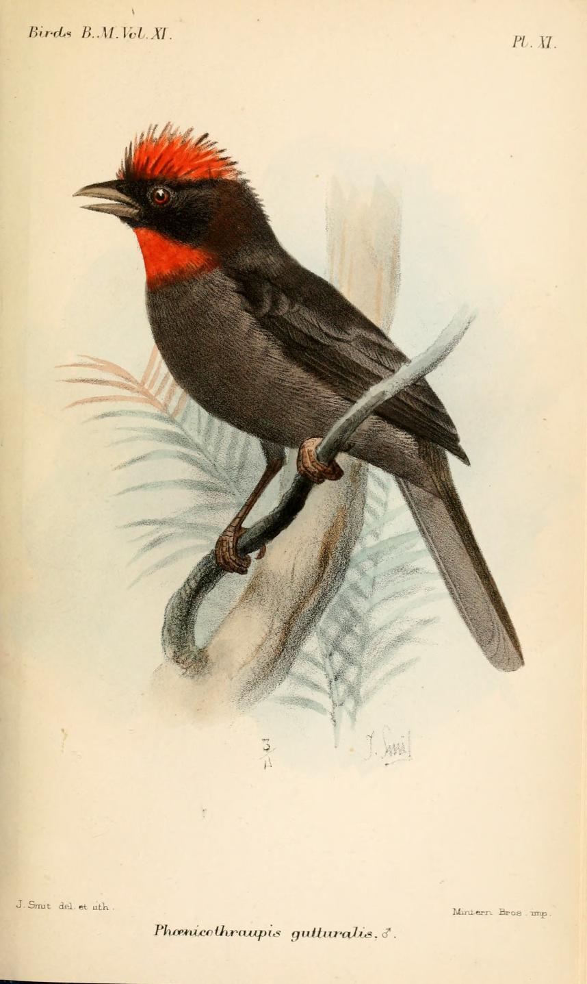 grosbeak lee u0027s birdwatching adventures plus