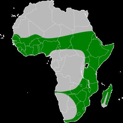 Black heron (Egretta ardesiaca)map) Range Map