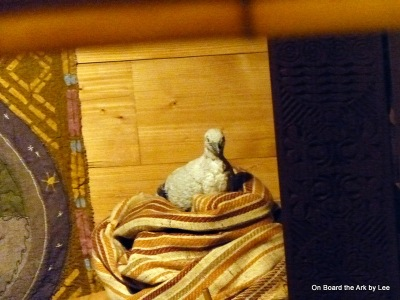 Dove resting on board the Ark