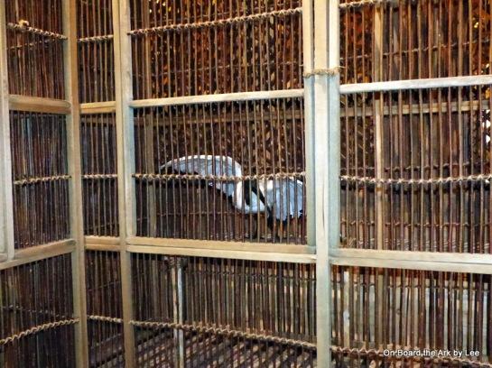 Sacred iIbis n Bird Enclosures at the Ark Encounter