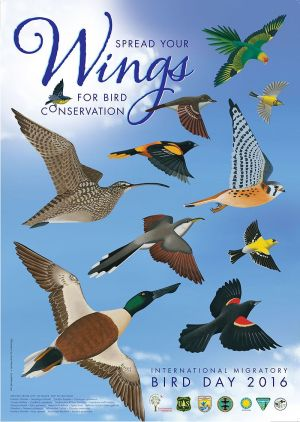 internatlmigratorybirdday-2016-poster