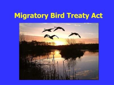 migratorybirdtreaty-pptslide-publicdomain