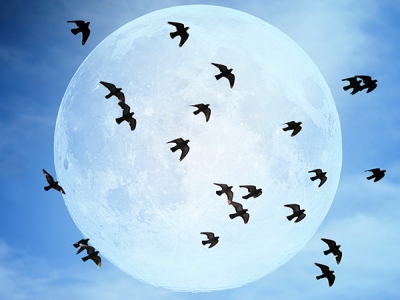 Birds at Night - ©BirdFeeders.com