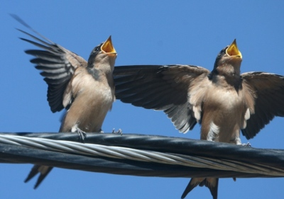 Birds Singing from BeliefNet