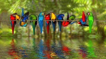 Gathering of Parrots ©I.Ytimg