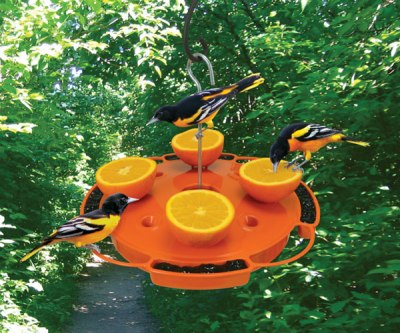 Orioles at Feeder ©Wildbeaks.com