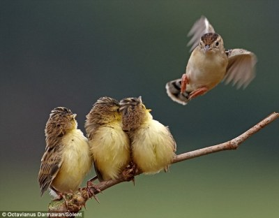 Birds Calling Out ©DailyMail