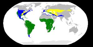 greatwhiteegret-range-map-wikipedia