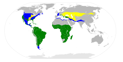 greatwhiteegret-range-map-wikipedia