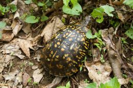 WHY  BIRDWATCHING  IS  WORTHWHILE   —   3 Lessons from a Box Turtle:  Independence, Patience, and Frugality