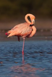 Flamingo on One Foot