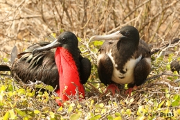 """""""F"""" is for Flamingos and Frigatebirds: """"F"""" Birds, Part1"""