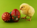 Baby Chick with Easter Eggs