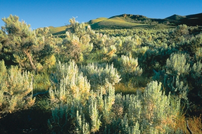 Sagebrush-terrain.Defenders-of-Wildlife-Blog-ScottSmith.jpg
