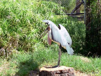 Marabou Stork LP Zoo by Lee