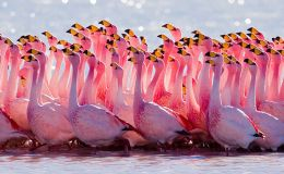 Tickle Me Tuesday's – Flamingos